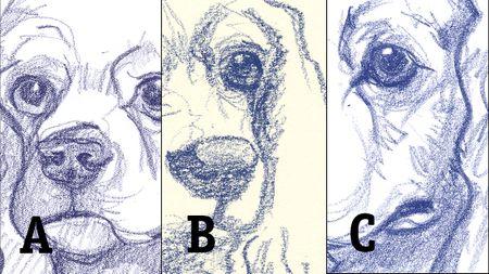 Dogsketchcomparison