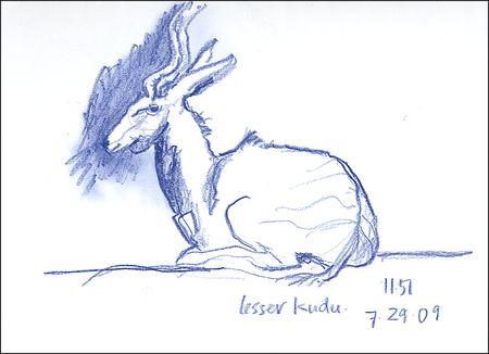 090729KuduCropA