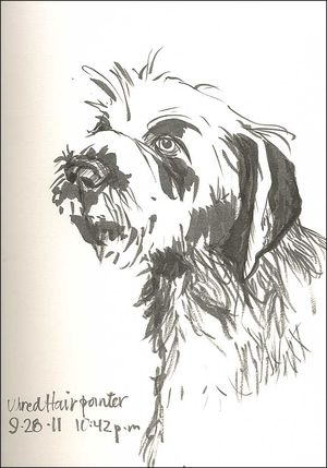 110928WireHairPoint