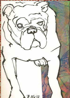 120705Abulldog