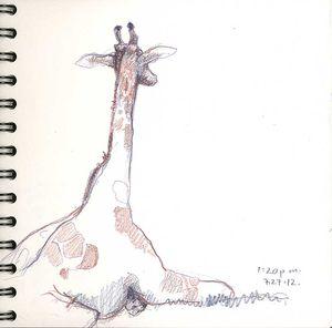 120728_09Giraffe