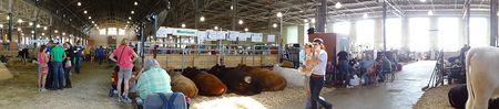 CattleBarn01524