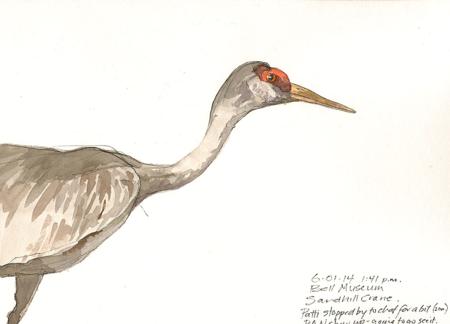 140601_A_BellMuseum-Crane