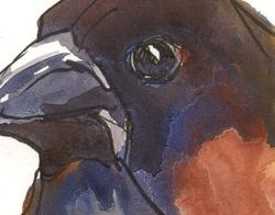 140527_Finch-Detail