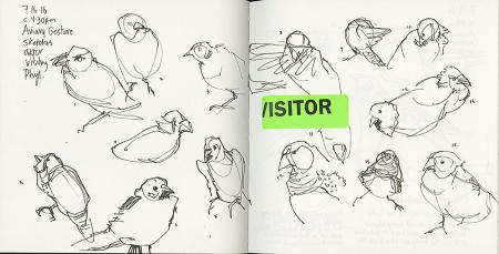 160716_C_Bird-GesturesCR