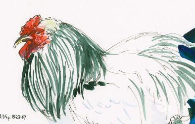 2019-mn-st-fair-35-190827-11-chickenCRAltBRFeat