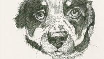 210115-3-sktchy-shaelynn-marcroft-dog-pen-fabCRAltfeat